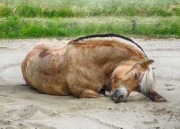 Paarden fotografie